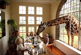 Giraffe Manor - Nairobi, Kenya