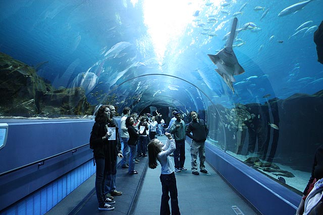 Georgia Aquarium - Atlanta, Georgia