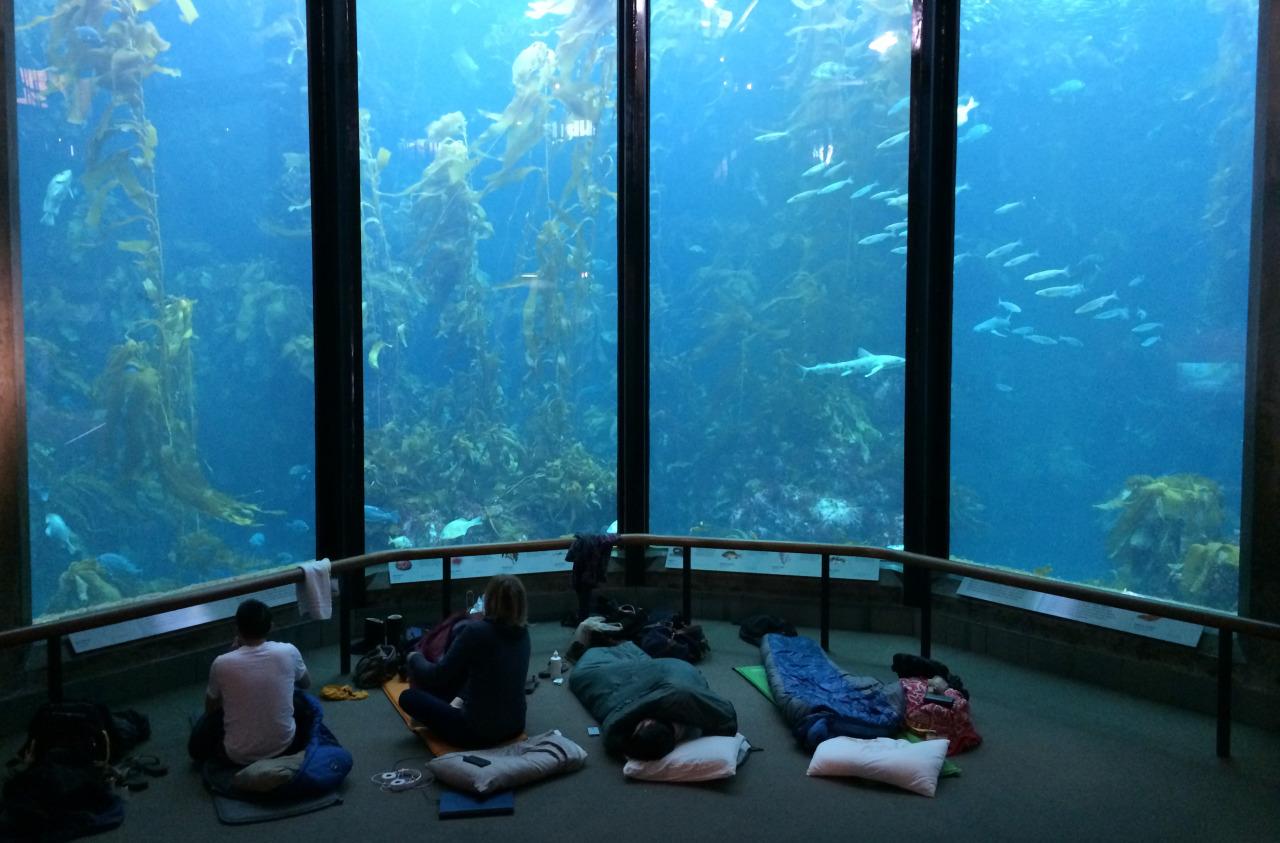 Monterey Bay Aquarium - Monterey, California