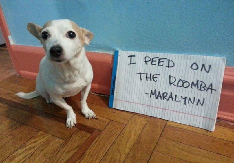 Maralynn is a Luddite, we know it