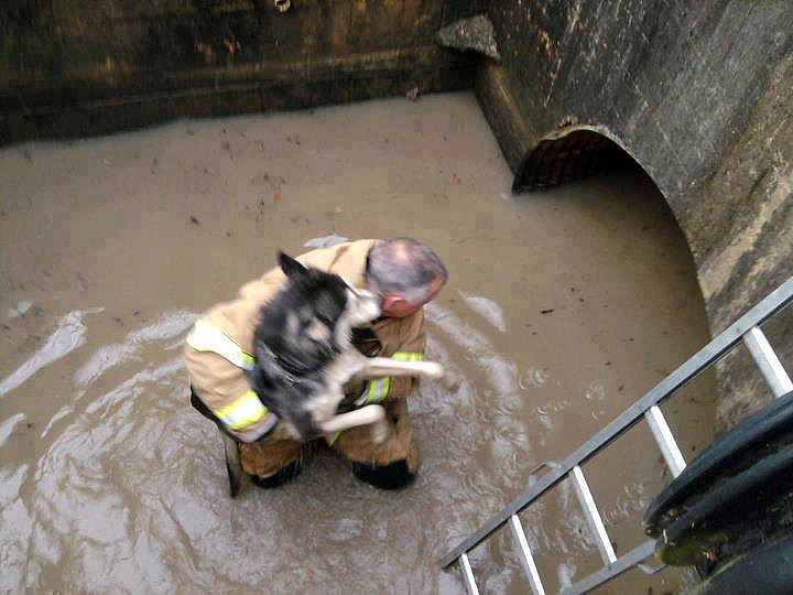 Husky in the Sewer