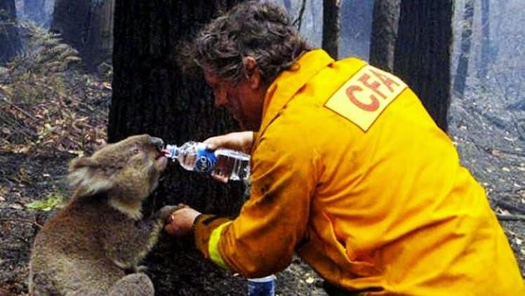 The Thirsty Koala