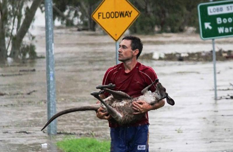 Kangaroo in the Flood