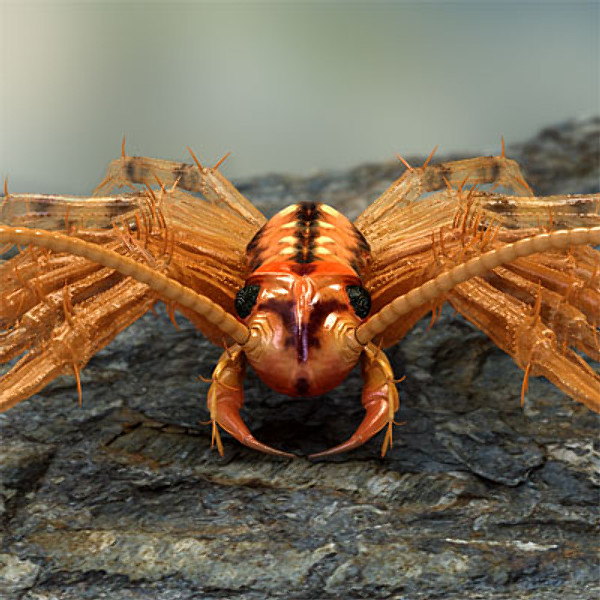 15 Of The World S Most Nightmare Inducing Insects Page