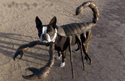 Cuddly Scorpion