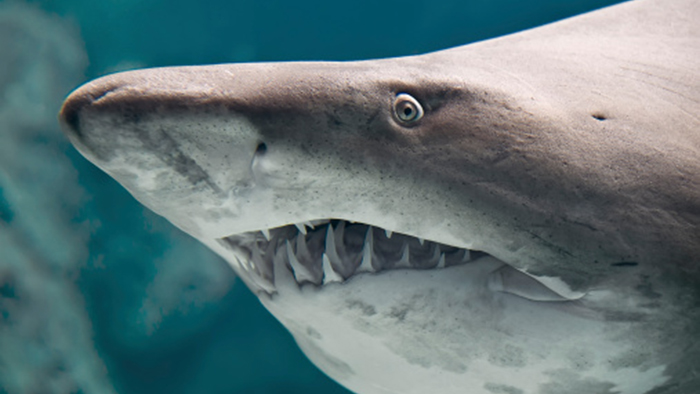 This Amazing Predator Has A Cornea Most Similar To A Human
