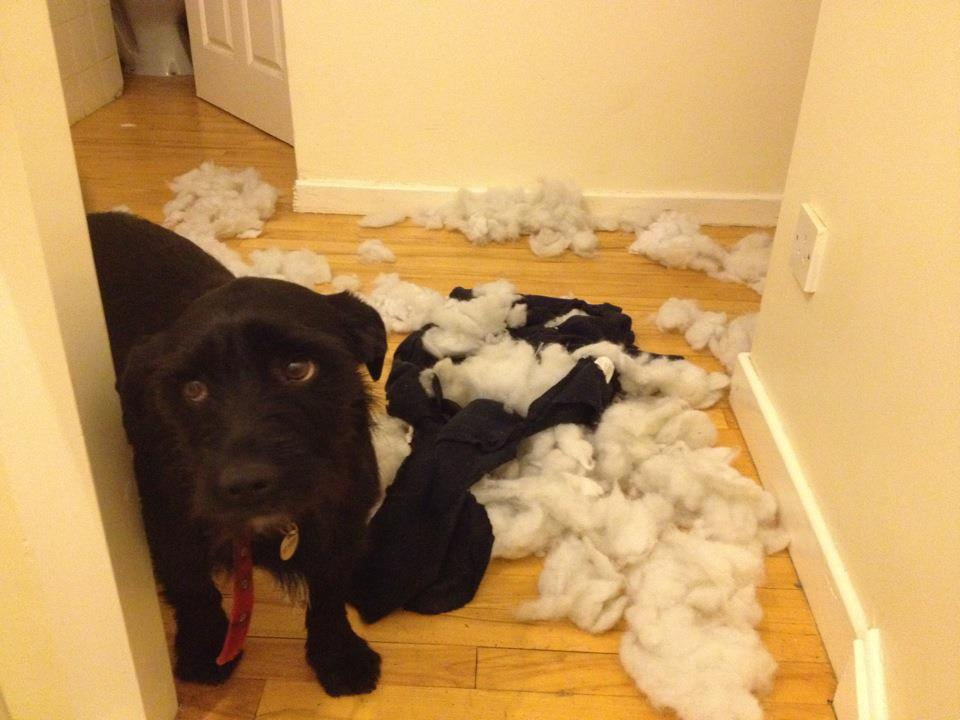 Epic Pictures Of Guilty Dogs Caught In The Act