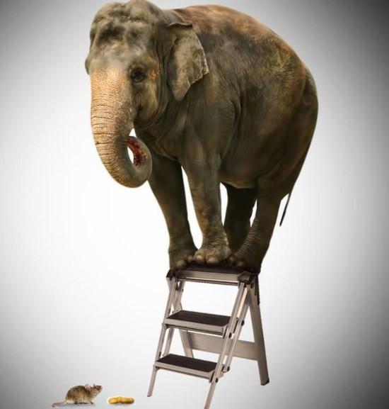 Elephants Are Afraid Of Mice