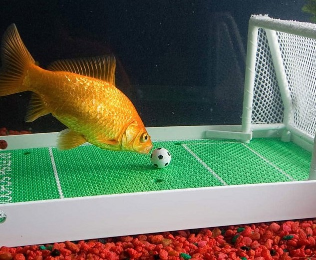Goldfish Have A 3 Second Memory