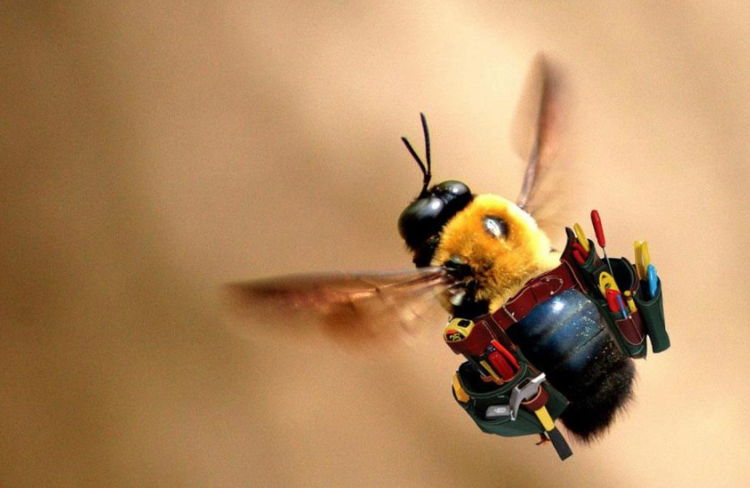 Bees Die After They Sting You
