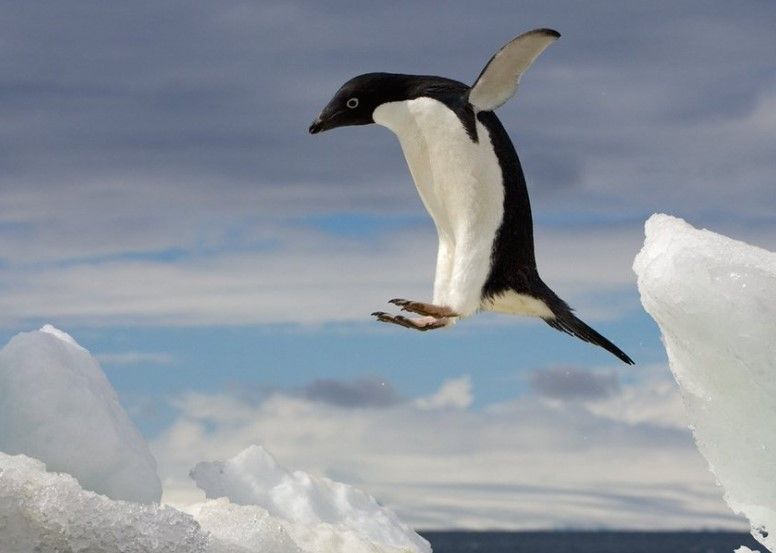 Penguins Will Fall Over If They Look Up