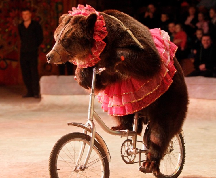 Circuses Help Us Learn About Animals