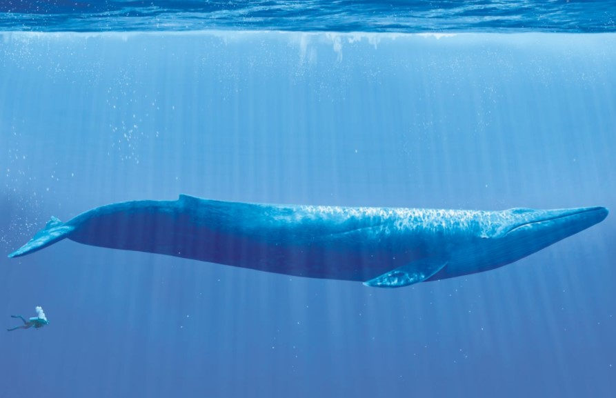 A Blue Whale Can Swallow You