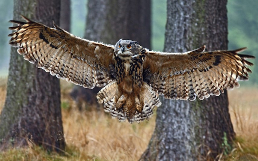 Owls Are Smart