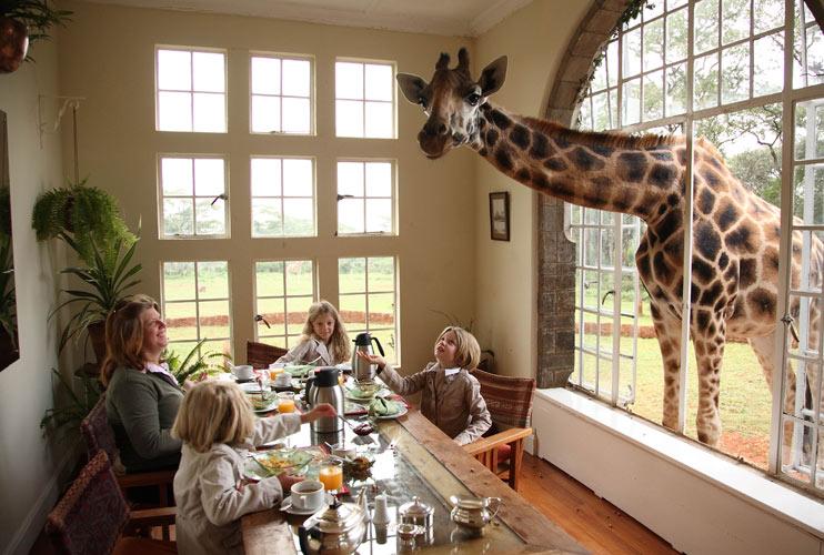 Safari Collection's Giraffe Manor